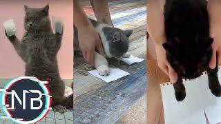 Tik Tok Chó Mèo - Troll Mòe Hoàng Thượng Với Băng Dính | 抖音#06
