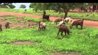 Zambia, ZKids News, Farming
