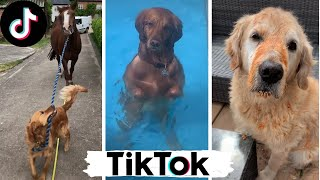 Funny Dogs of TikTok Compilation ~ Doggos Doing Funny Things TIK TOK ~ 2020