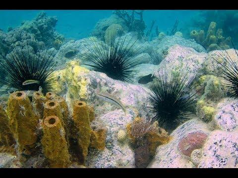 Martinique : plongée libre à Anse Dufour