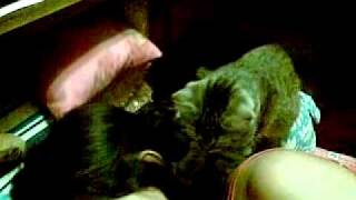Cat Massage by  Cat Masseuse