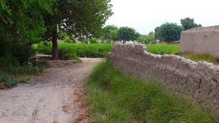 Pakistani Punjab Village Best Tour | Rural Life In Pakistan