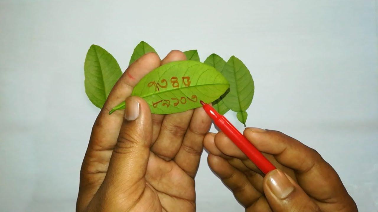Download লেবুপাতায় নাম লিখে যাকে খুশি তাকে বশ করুন/Labu pata bosikoron by Tontro Montro