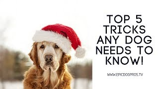 Dog Training 101 Basic Obedience The Most Important Things To Teach Your New Dog Or Puppy