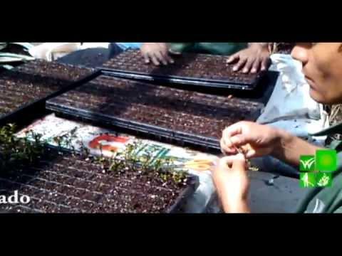 geminacion de semillas y enrizamiento de plantas ornamentales