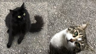 Talkative Cats, and Calming Oliver Down