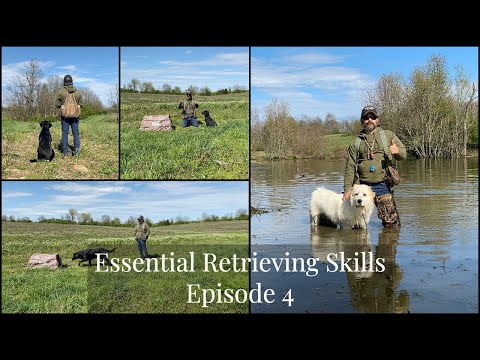 Labrador Retriever | Essential Training Skills Episode 4