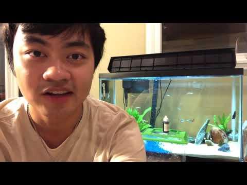 How To Breed Zebrafish/Glofish Danio: Easy, Cheap, $10 Setup [Part 2]
