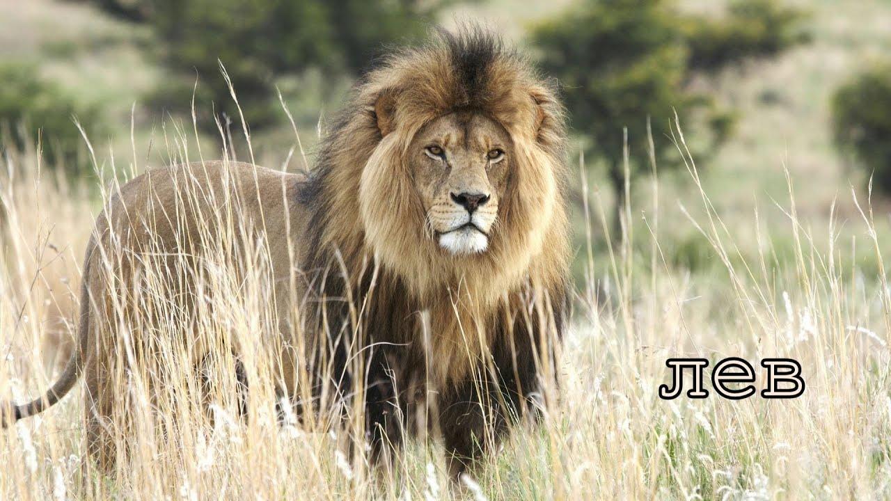 Голоса и звуки животных Африки. - YouTube