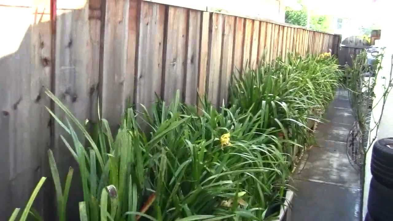 quick glance in my small backyard my entire orchids collections