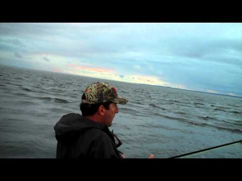 Fly fishing for stripers in Branford ,Ct