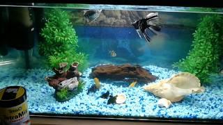 Как кормить сомика в аквариуме