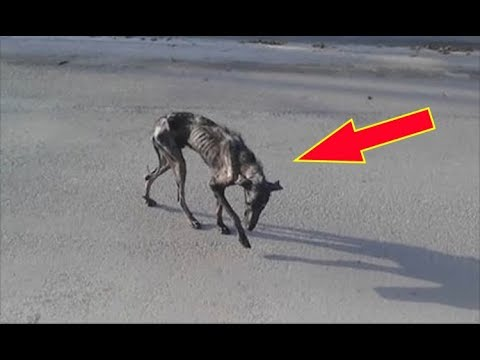 Woman Gave This Stray Dog A Home To Die In But A Remarkable Event Happened Instead.