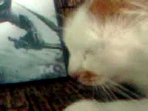 кошка и DARCSIDERS 2