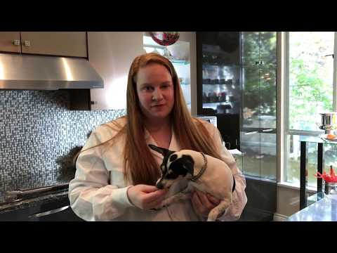 Puppy Nutrition with NHV's Vet Tech Johanna