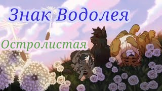 Остролистая ~ Знак Водолея {Коты-Воители}/Hollyleaf ~ Warrior cats