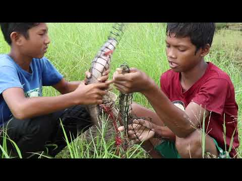 Amazing Poor Children Trapping Big Fish Uses Khmer Primitive Chuch Trap - Khmer Ancient Fish Trap