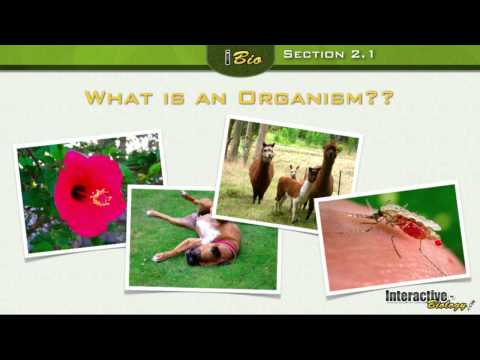 Principles of Ecology - Organisms and the Environment  Part 1