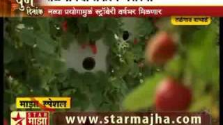 Hydroponic Strawberry Cultivation in India