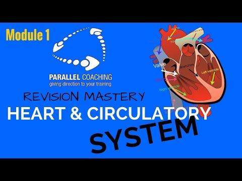 L2 A&P RMS - Module 1 Heart