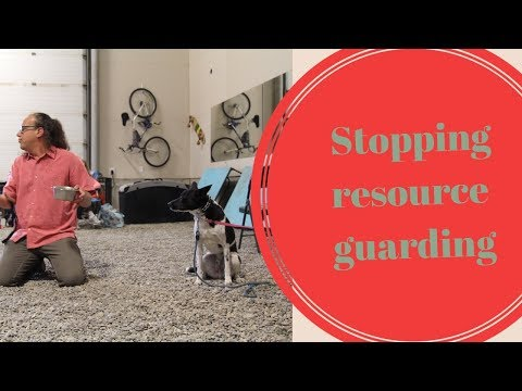 Teaching the Out Command, Life Saver for Dogs that Resource Guard
