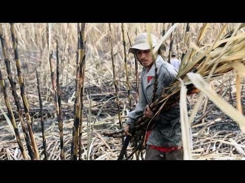 El Salvador's sugarcane workers and their silent killer - The Cure