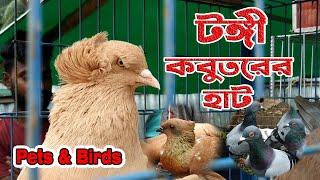 Tongi Pigeon Market | টঙ্গী কবুতর হাটে অনেক কবুতর উঠেছে