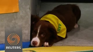 Puppies pound the gridiron for the 13th annual Puppy Bowl