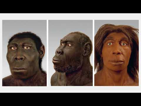 sapiens:-a-brief-history-of-humankind---chapter-1:-an-animal-of-no-significance