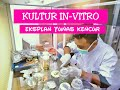 - Kultur Jaringan Tissue Culture , Eksplan Tanaman Kencur.. Belajar bareng yukk!!