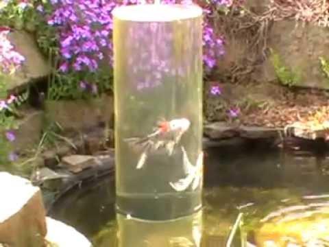 Goldfische im teich beim laichen teil 3 doovi for Goldfische gartenteich winter