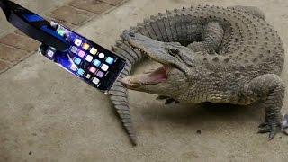 КРОКОДИЛ СЪЕЛ НОВЫЙ iPHONE