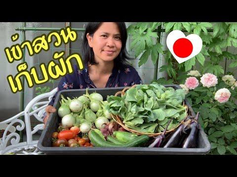 เข้าสวนเก็บผัก ปลูกผักไทยในญี่ปุ่น มีทุกอย่าง - วันที่ 23 Jul 2019