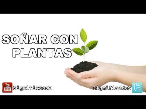 Significado de Soñar con Plantas