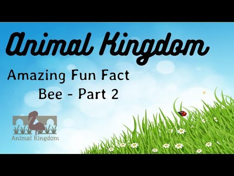 Animal Kingdom - Amazing Fun Fact about Bees  – Part 2