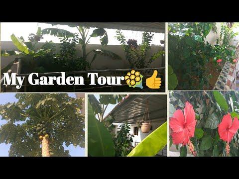 My kitchen Garden Tour👍Tips & IdeasHow to maintain plants & vegetables around Home