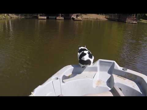 Our cat diving and swimming