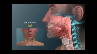Anatomia de articulação das vogais o u - Fonovim Fonoaudiologia