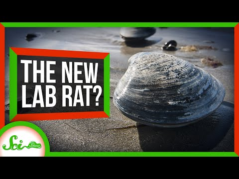 Bivalves Could Be The New Lab Rats