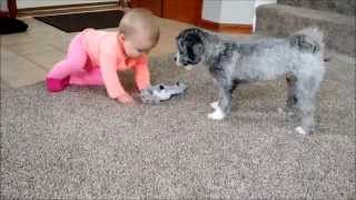 Puppy and baby battle for toys