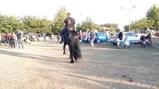 Φάρμα Αλόγων Γκοσδής - Ανδραβίδα 2019 - Friesian