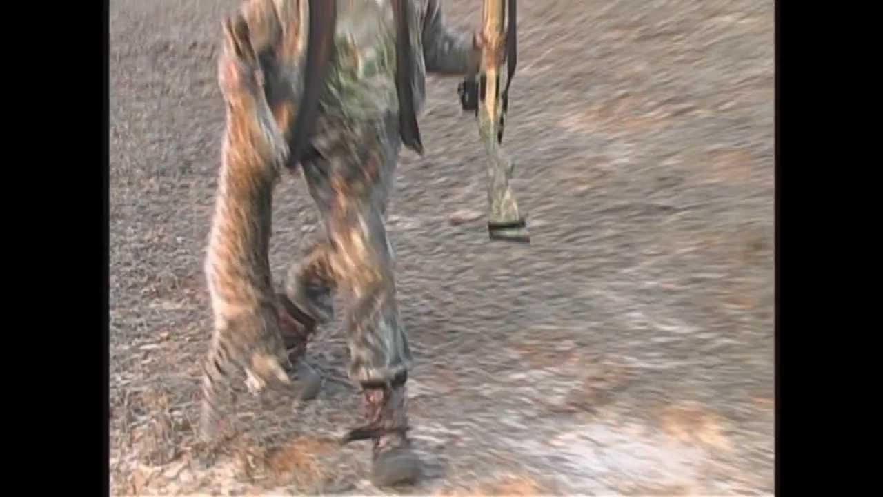 Predator Hunting Huge Texas Bobcats Youtube