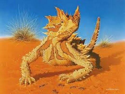 Wildlife -  Desert Sahara