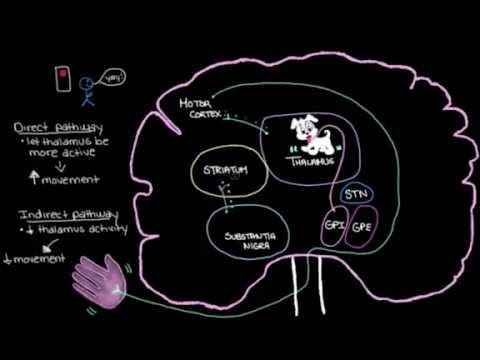 Khan Academy - Putting It All Together: Pathophysiology of Parkinson