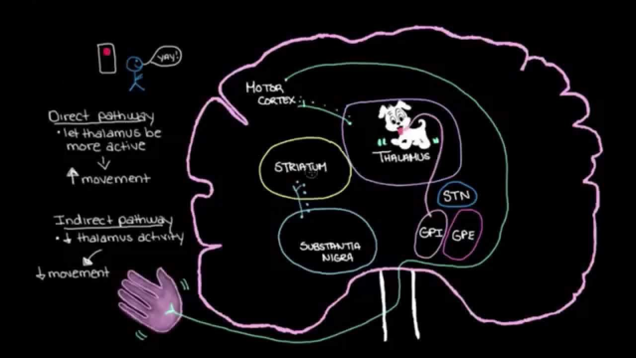 Khan Academy - Putting It All Together: Pathophysiology of ...