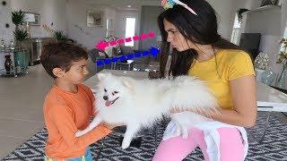 Bela e Magu Querem o Mesmo Pet Cachorrinho - Bela Bagunça