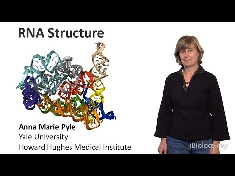 Anna Marie Pyle (Yale U./HHMI) Part 1: RNA Structure