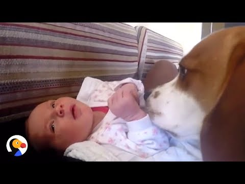 Dog Meets Baby Sister - Has THE BEST Reaction | The Dodo