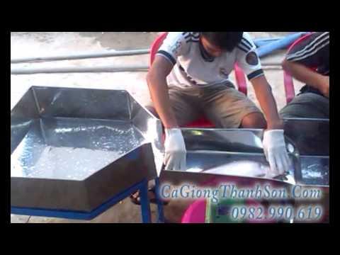 cá nàng hai - cá thác lác cườm - cá giống  Thanh Sơn