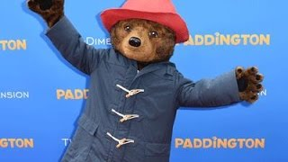 Paddington, the Diva Bear